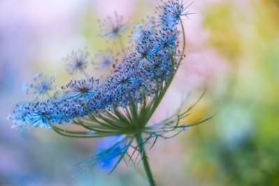 flor en pensamiento