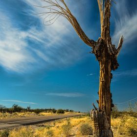 The Tohono Tribe believe the Saguaros are people.  This one is the Guardian of the Highway.