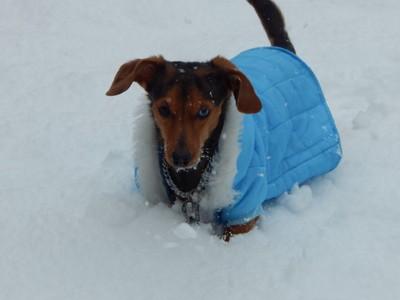 lovin the texas snow