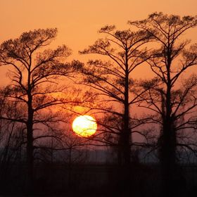 The sun sets behind the Cypress trees