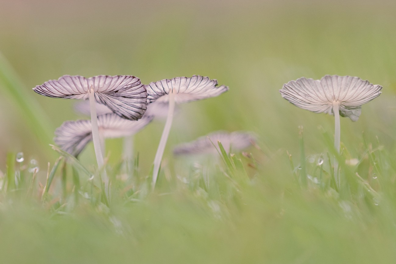 Mushrooms Photo Contest Winner