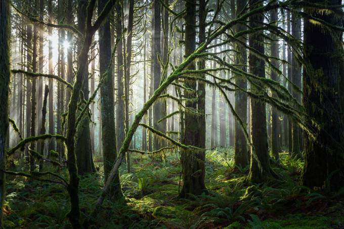 Mossy by nikipike - Silhouettes Of Trees Photo Contest