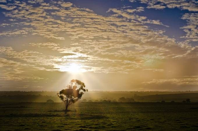Bathed in light by sallyrevell - A Lonely Tree Photo Contest