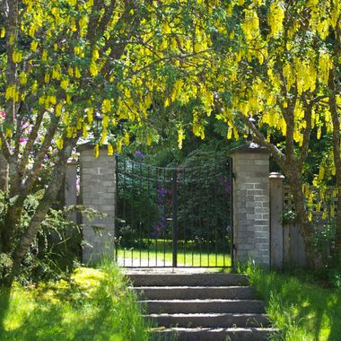 DRAPED GATE in YELLOW in Qualicum Beach - 29 May 2007