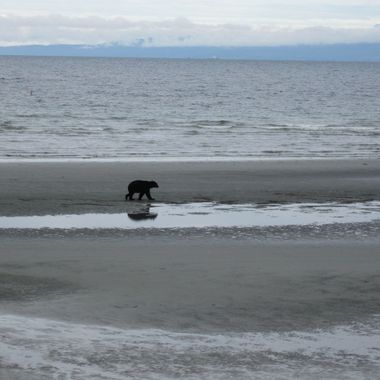"BLACK BEAR on the BEACH - thank goodness it was the ""Day After Labour Day Weekend!!!"""