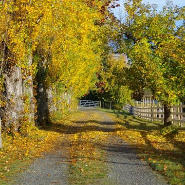 Golden Driveway, Qualicum Beach, B.C. on Vancouver Island - 22 Oct 2007