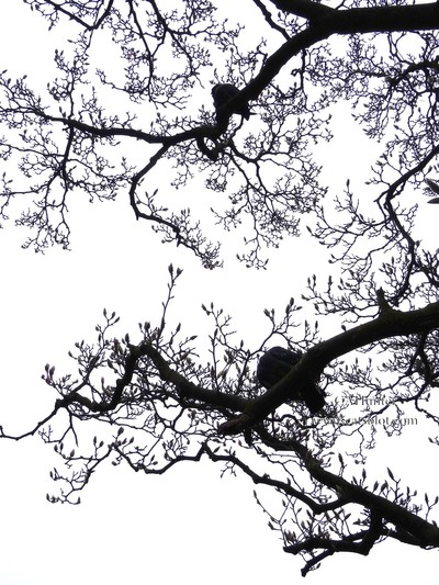 Bird and Blossom silhouettes