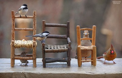Birds & Chairs