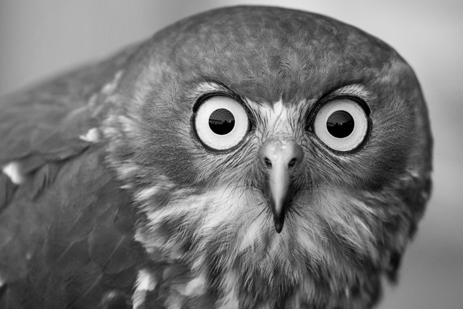 animal faces viewbug contest portraits winners contests choice tripod backpack win pro
