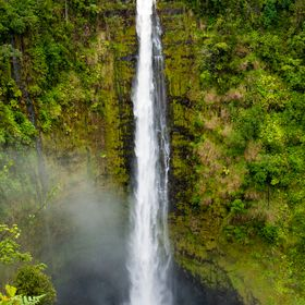 Akaka Falls, Hawaii, the falls brimming full of water from the evening's rains.