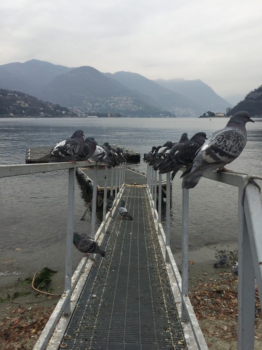 While I was exploring Como Lago, The birds came and lined up as a group. I thought it was the per...