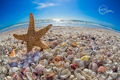 Starfishshells72
