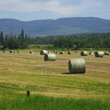 HAY BALES - ROUND - Up country B.C. around Salmon Arm - Summer 2007