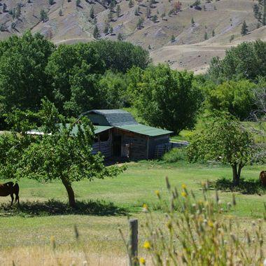 Horses of Cariboo area - 07July07