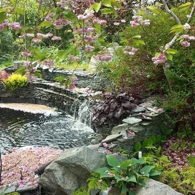 Tranquil setting with pink blossoms everywhere during Mother's Day Annual Oceanside Garden Tour - May 2015