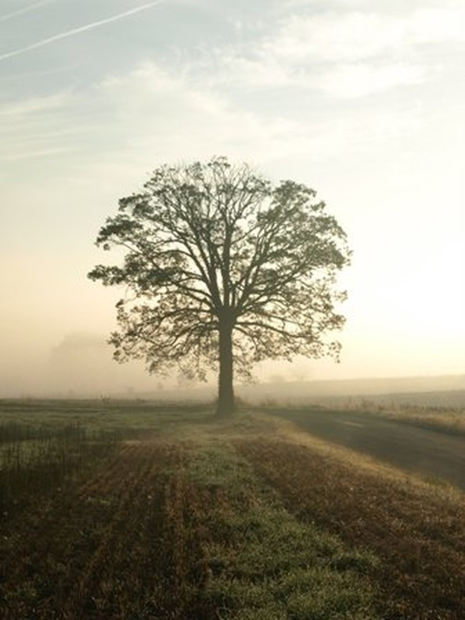 A Lone Tree's Morning by Michelet - Tree Silhouettes Photo Contest