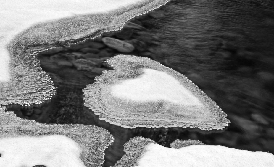 Heart shaped ice in Loyalsock Creek at Worlds End State Park.