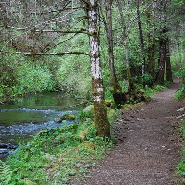 Steam along path - May 5, 2015 - on Englishman River, approached at end of Allsbrook in Parksville, B.C.