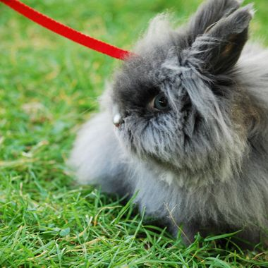 REAL RABBIT!  - Parksville Park - Summer 2015
