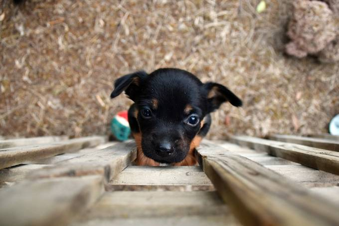 Puppy! by jessymay - Kittens vs Puppies Photo Contest