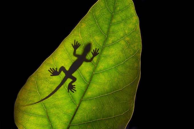 Phantom of Lizard by lekahuie - Semitransparent Photo Contest