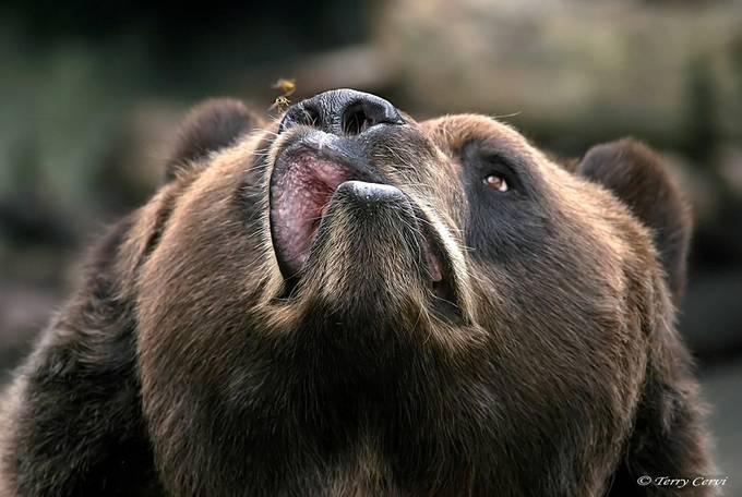 I'll Get 'Cha! by terryc - Big Mammals Photo Contest