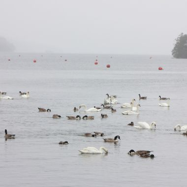 I took this photo during our visit to the Lake District in the year 2012. Windermere is the largest lake in the area.