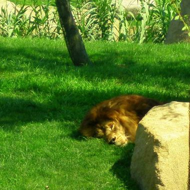 I took this photo when we were visiting Spain in 2010. We also visited the zoo in Valencia.