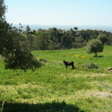 This photo was taken near a village (Çınarlı), in Cyprus, in 2010.