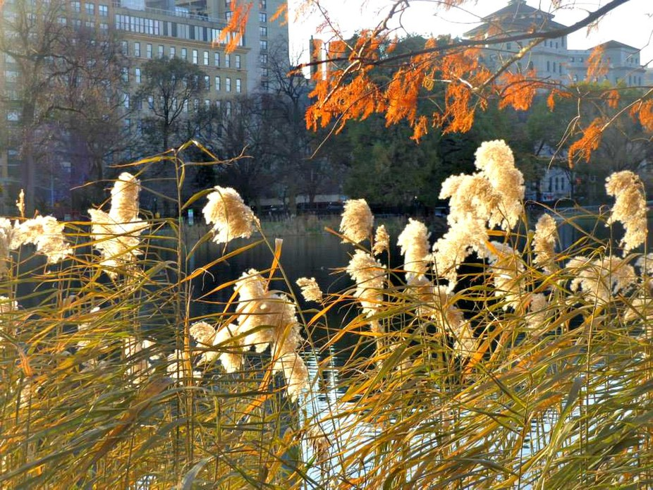 Central park chilly day