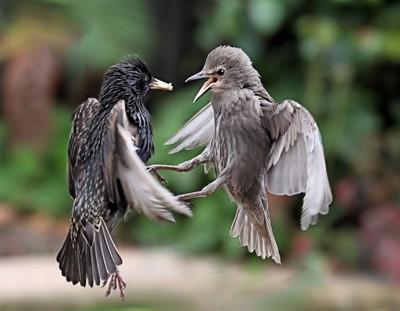 Aerial Fight