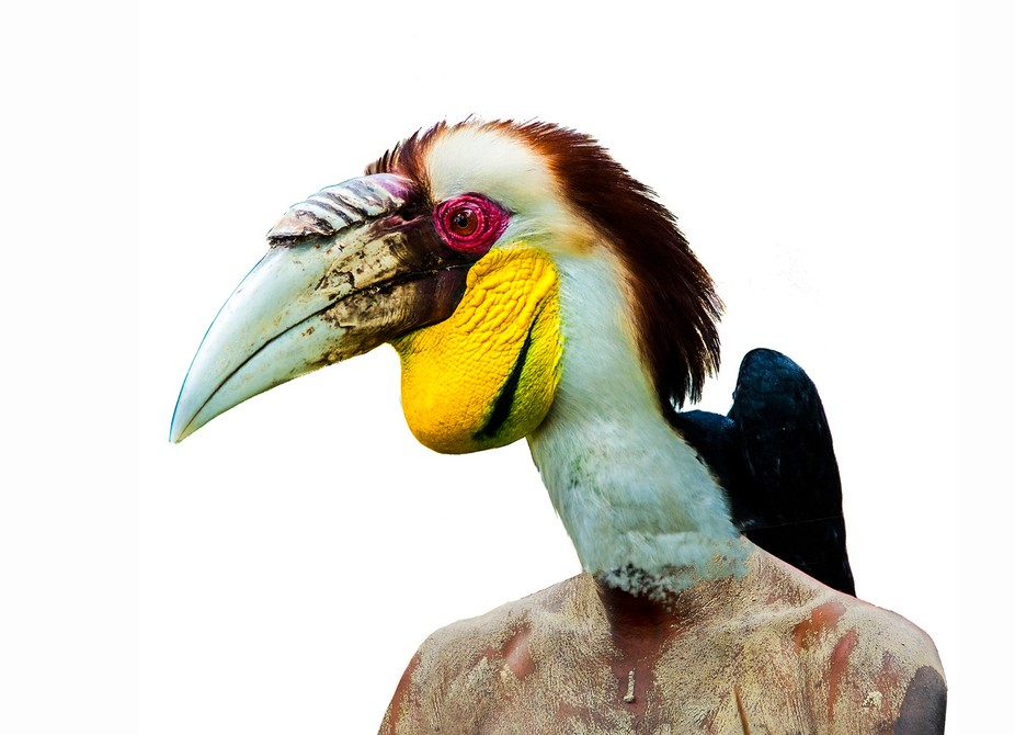 Birds and humans talk in the same way.   Birds and humans look different, sound different and evo...