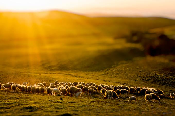 Transhumance in Tuscany by christianbrogi - TiltShift Effect Photo Contest