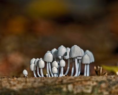Miniture Forest