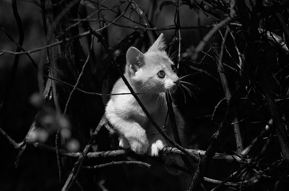 Gato PB - na selva