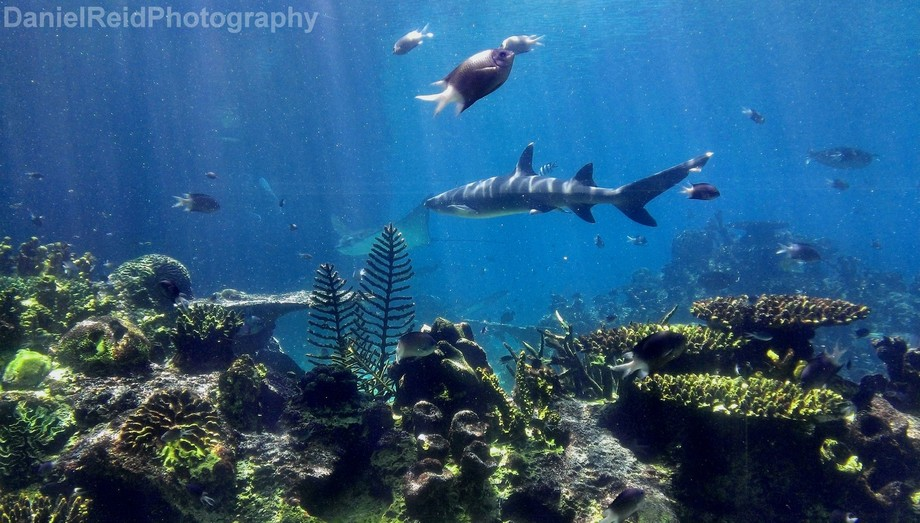 This Shot I took at SeaWorld, QLD of the underwater tanks, the sense of peace and perfect harmony...