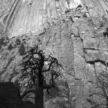 When photographing large subjects it is sometimes difficult to convey the size. While shooting Devils Tower National Monument, I wanted the viewer to get a sense of its size by setting the camera close to the subject, using a low angle, and having something in the foreground.