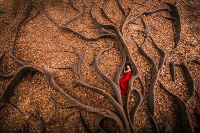 Roots Birth