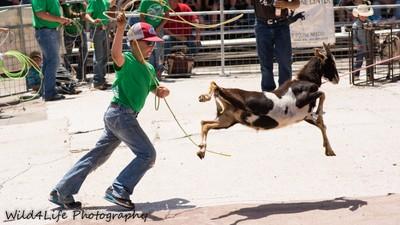 Goat roping high flyer