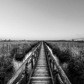 Prospective vanishing point in a wood pier path over Massaciuccoli Marshes, a really nice wetland reserve in northern Tuscany, the bird biodivers...