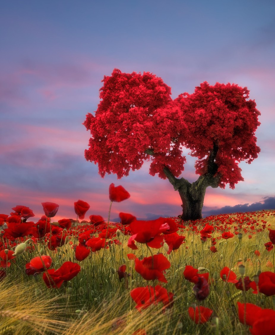 Tree love by Dolcefoto