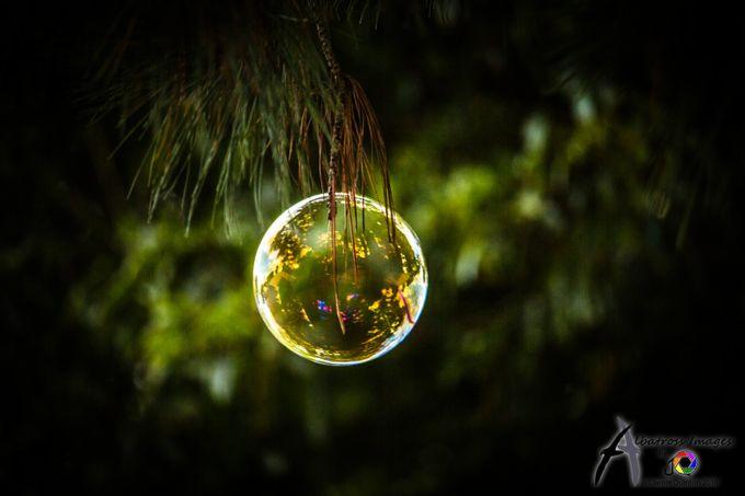 Christmas Baubble by Albatross_Images - Bubbles Photo Contest