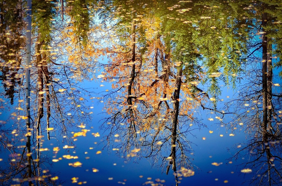 Autumn Reflection.