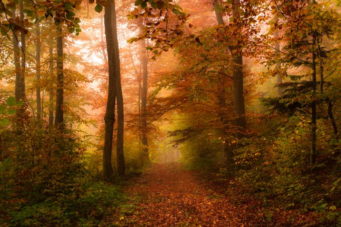 One way to mystery by DianaAndras - Fall 2016 Photo Contest