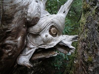 the Gargoyle of the woods