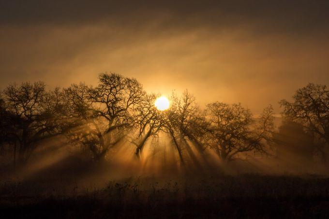 Awakening by AnjiJ - Silhouettes Of Trees Photo Contest