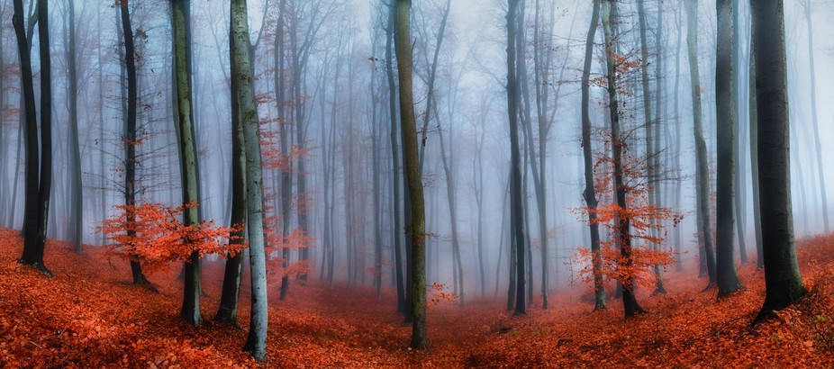 Misty Day in Lendava