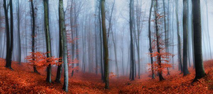 Misty Forest by Jeso - Freshmen 2016 Photo Contest Vol 2