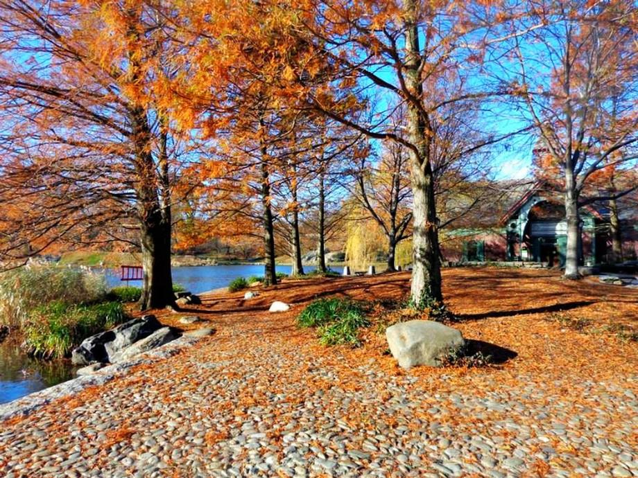 Central Park Dec