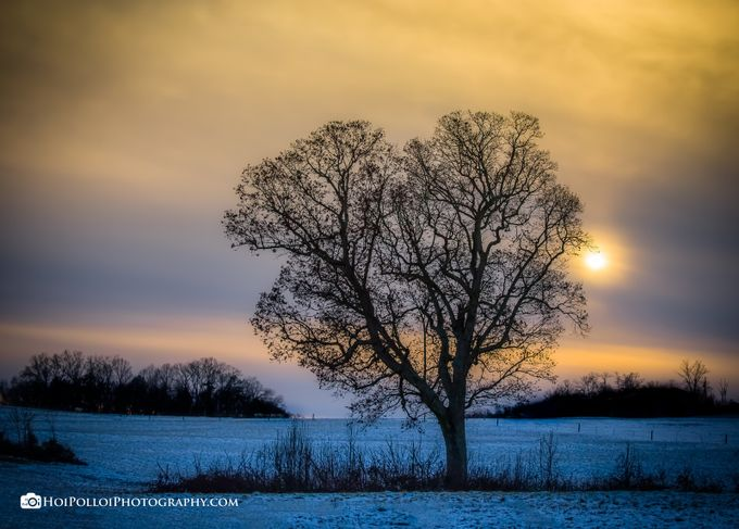 Mother Nature's Valentine by Merma1d - Silhouettes Of Trees Photo Contest